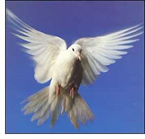 spirit_dove2.jpg