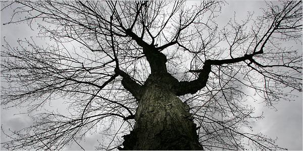 18tree-600.jpg