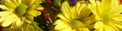 daisies1000x254th.jpg